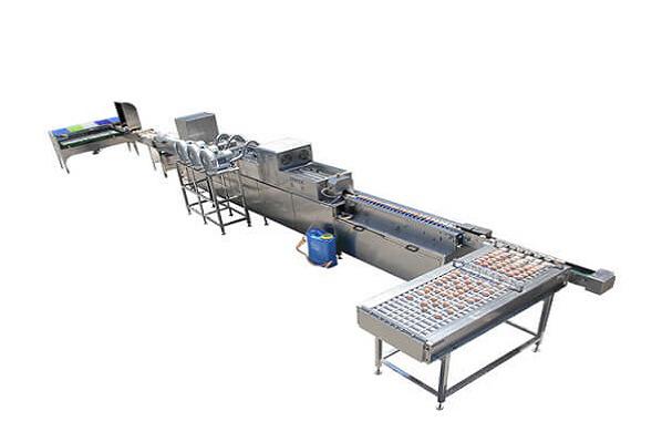 liquid egg processing equipment