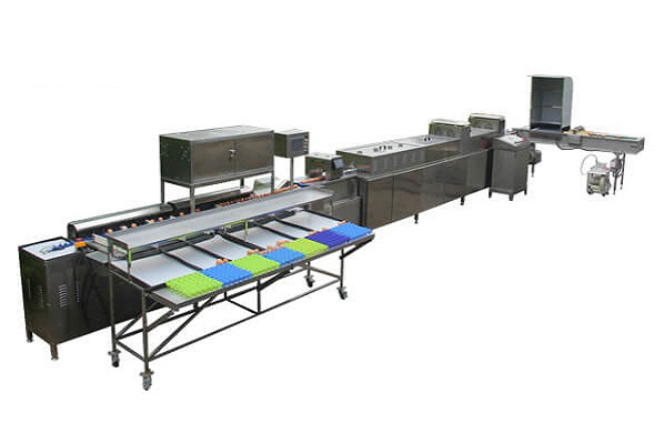 Chicken Egg Processing Equipment